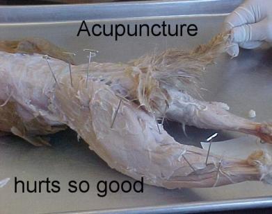 lolcat acupuncture cat