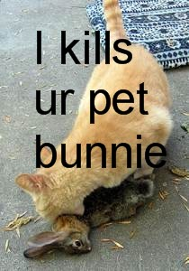 lolcat cat kills rabbit