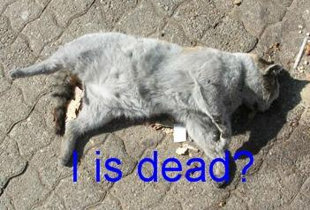 lolcat dead cat