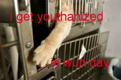 cat euthanized lolcat